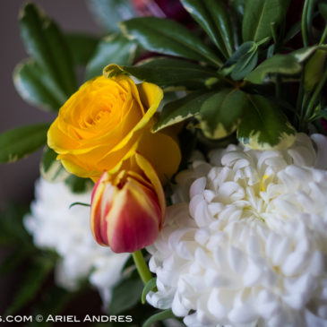 Another 365 Project – Day 236